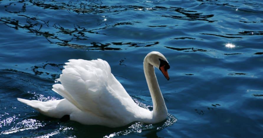 Royal Swan на Ainsworth Gaming: Пълен преглед